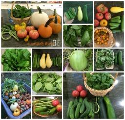 My Little Garden Experiment – An End-of-Summer Review